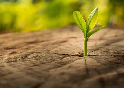 """La durabilité à l'aune des """"green bonds"""" genevois.  Manuel Wildhaber, directeur Finance & Banking chez EB Advisory (article Le Temps, mars 2018)"""